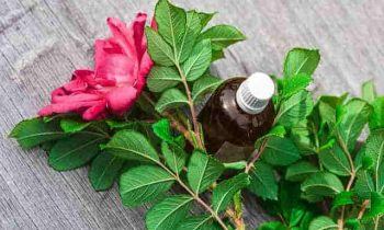 Healing Properties of Essential Oils