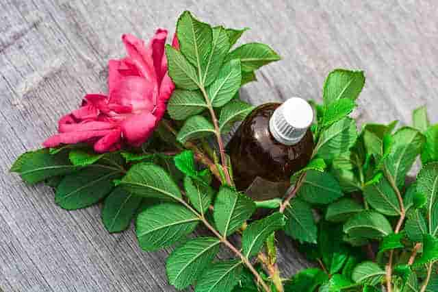 Healing Properties of Essential Oils
