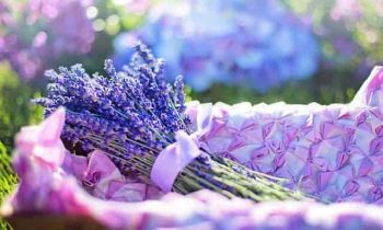 The Benefits of Lavender in Aromatherapy